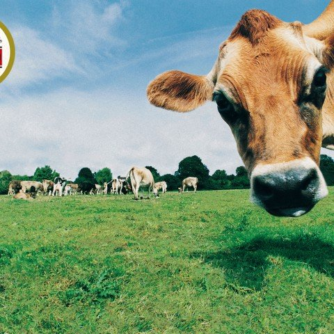 web vaca cuco